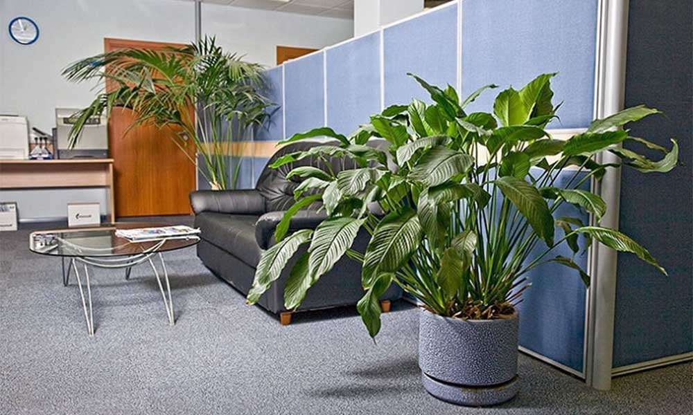 Đặt cây xanh tại góc phòng làm việc